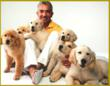 Golden Retriever Puppies From Renowned Breeding Kennel Featured in...